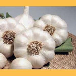 Ajo blanco de Extremadura, España. Un producto excelente