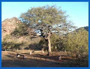 El patio de la casa de Atahualpa Yupanqui en Cerro Colorado, Provincia de Córdoba, Argentina, donde sigue reinando el folklore