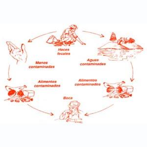 Cuadro sobre la transmisión del cólera