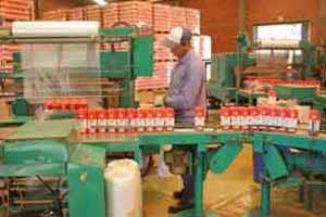 Línea de envasado de yerba mate en uno de los establecimientos productores de Argentina