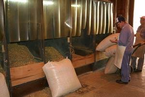 Selección de yerbas para obtener las mezclas de cada tipo que envasa un establecimiento productor de yerba mate en Argentina